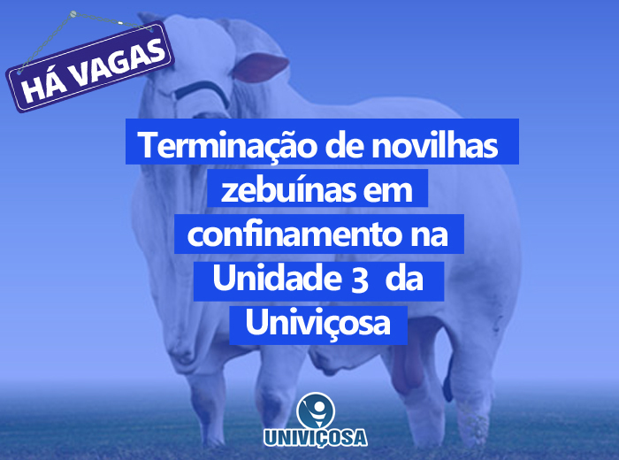 """As vagas são correspondem ao projeto""""Terminação de novilhas zebuínas em confinamento na Unidade3 da Univiçosa""""."""